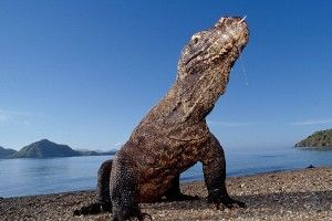 15 weird natural phenomena [PICS] - Matador Network
