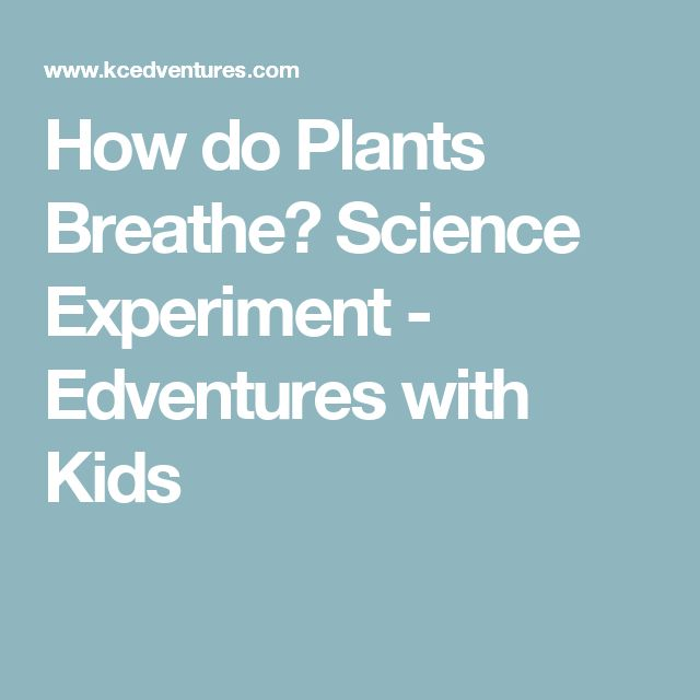 How do Plants Breathe? Science Experiment - Edventures with Kids