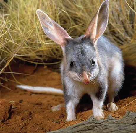Queensland National Parks - Outback Queensland