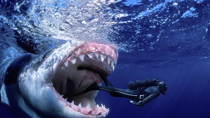jaws and megalodon - Google Search | JAWS/Megalodon ...