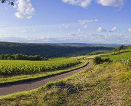 Village de Bouzeron dans le vignoble de la Côte Chalonnaise © BIVB / BAUDOUIN M