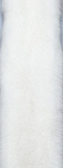 Fox - Saga Furs - Blue Shadow Fox / Услуги пушного брокера: www.furol.ru