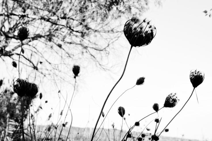 #wild #flowers #menfi #sicily #menfishire