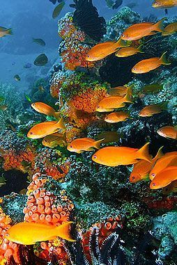 Magical beauty | under the sea | | oceanlife | | amazing nature | #oceanlife #amazingnature https://biopop.com/