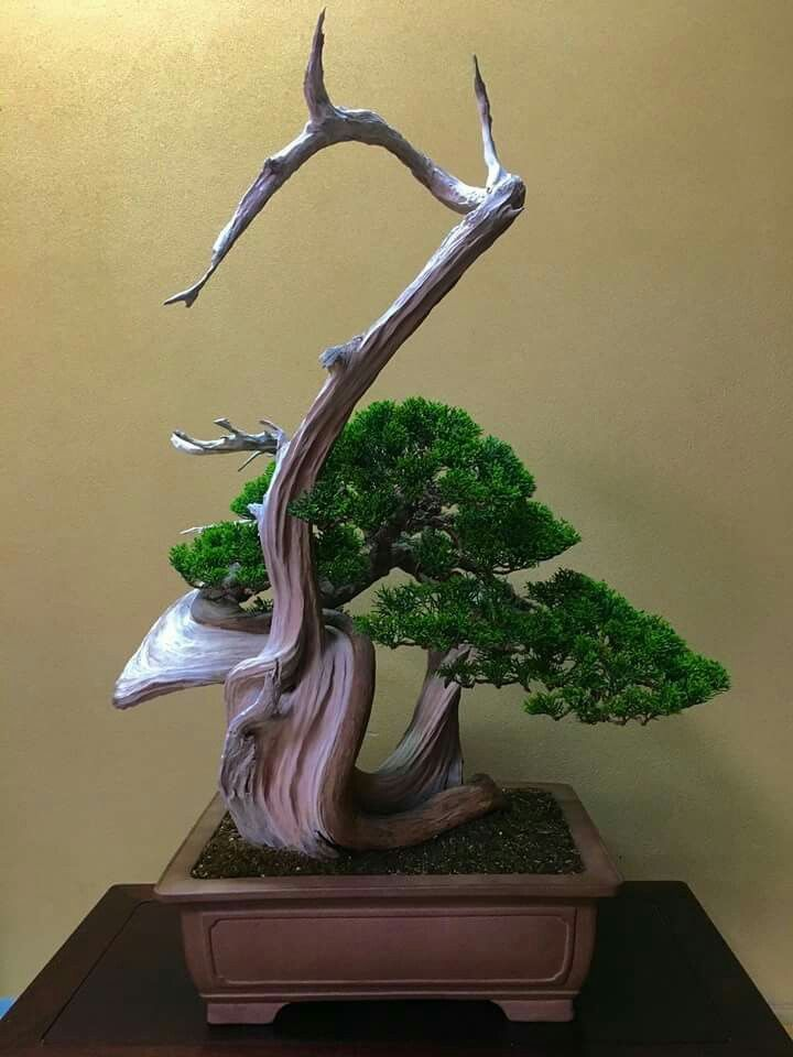 Tree: Itoigawa Shimpaku.  Picture of Isao Omachi's Facebook feed.  #Bonsai…