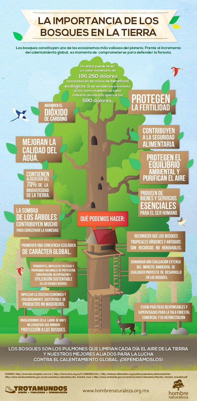 Infografía: LA IMPORTANCIA DE LOS BOSQUES EN LA TIERRA - Los bosques constituyen uno de los ecosistemas más valiosos del planeta. Frente a la agudización del calentamiento global, es momento de asumir un compromiso real de defensa de la foresta. Fuente: https://fundacionhombrenaturalezablog.wordpress.com