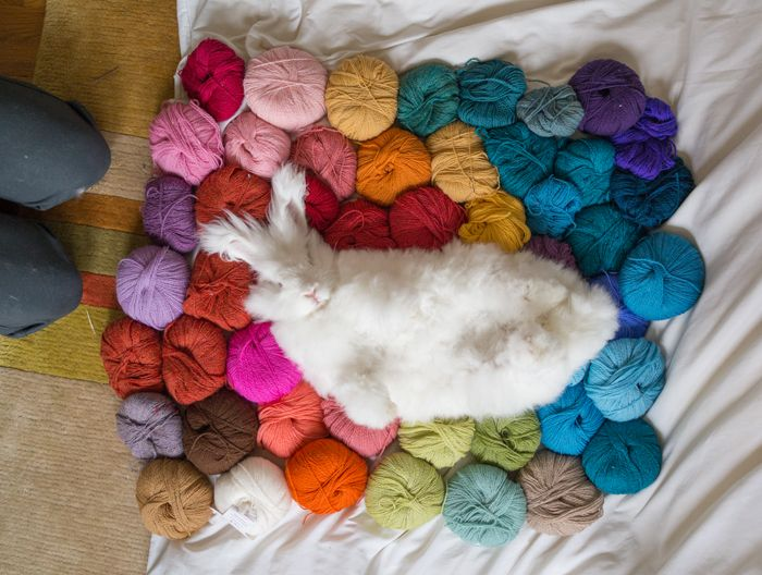 What's not to love about this photo! Cute bunny and pretty, colourful yarn is a powerful combination.