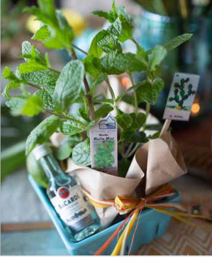 Mojito Kit takeaways with #Crateandbarrel ceramic basket See this Instagram photo by @monicahart1 • 24 likes