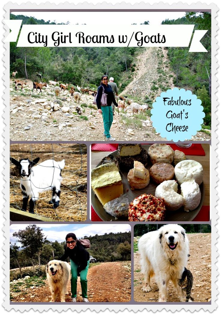 A city girl in Provence Verte - Roaming with Goats and a story of incredible truffle goat's cheese. Words here: http://www.foodandthefabulous.com/featured-articles/provence-verte-city-girl-roams-with-goats/