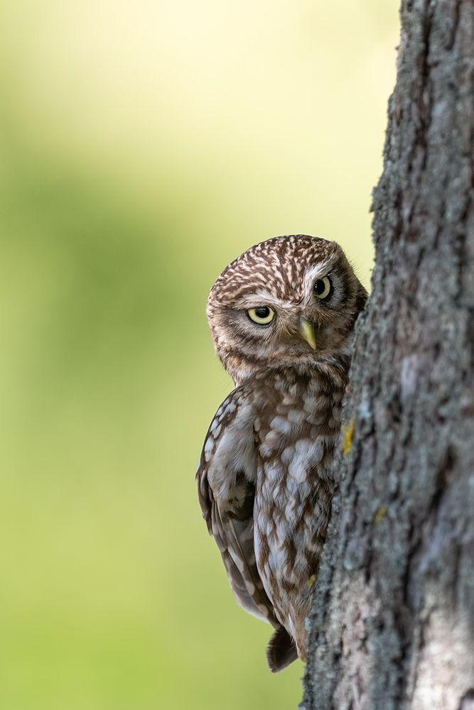 Owls Image By Iwona Laczny Owl Photos Barn Owl Owl