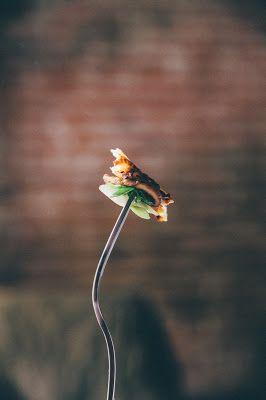 Zemiakové pečené rosti so šampiňónmi a jarnou cibuľkou | JEDZ A MILUJ