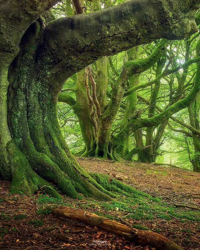 'Green Giants' - Western Scotland | Deep in the haunted fore… | Flickr
