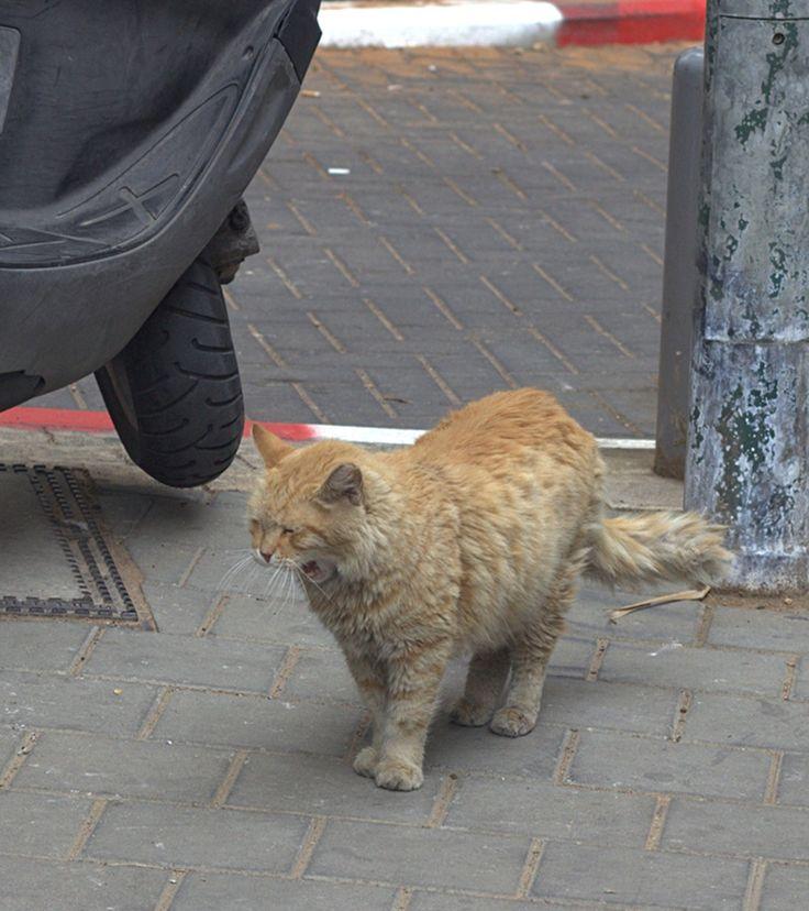 Nice cat:)