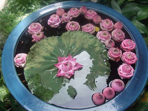 1000 images about water gardens on pinterest gardens for Fish pond preparation