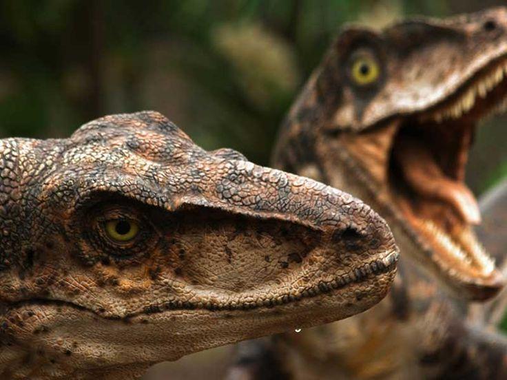 Jurassic World: ¿Qué tipo de dinosaurio eres? (Test de personalidad   Quiz online español   Juegos de preguntas)