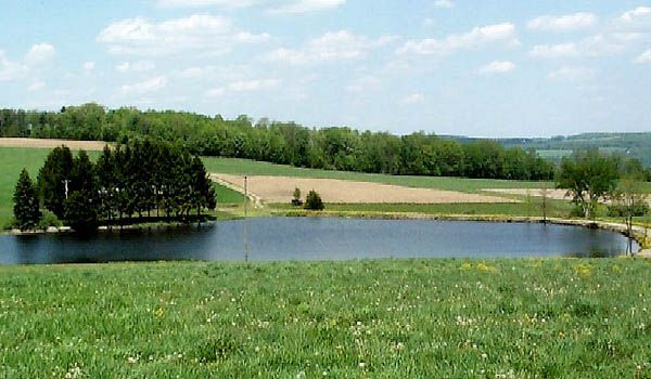 1000 images about our pond on pinterest chesapeake for Beautiful small ponds