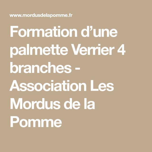 Formation d'une palmette Verrier 4 branches - Association Les Mordus de la Pomme