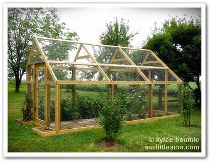 """chicken wire """"greenhouse"""" to keep out birds, deer and rabbits Projects X 2: The Berry Barn"""