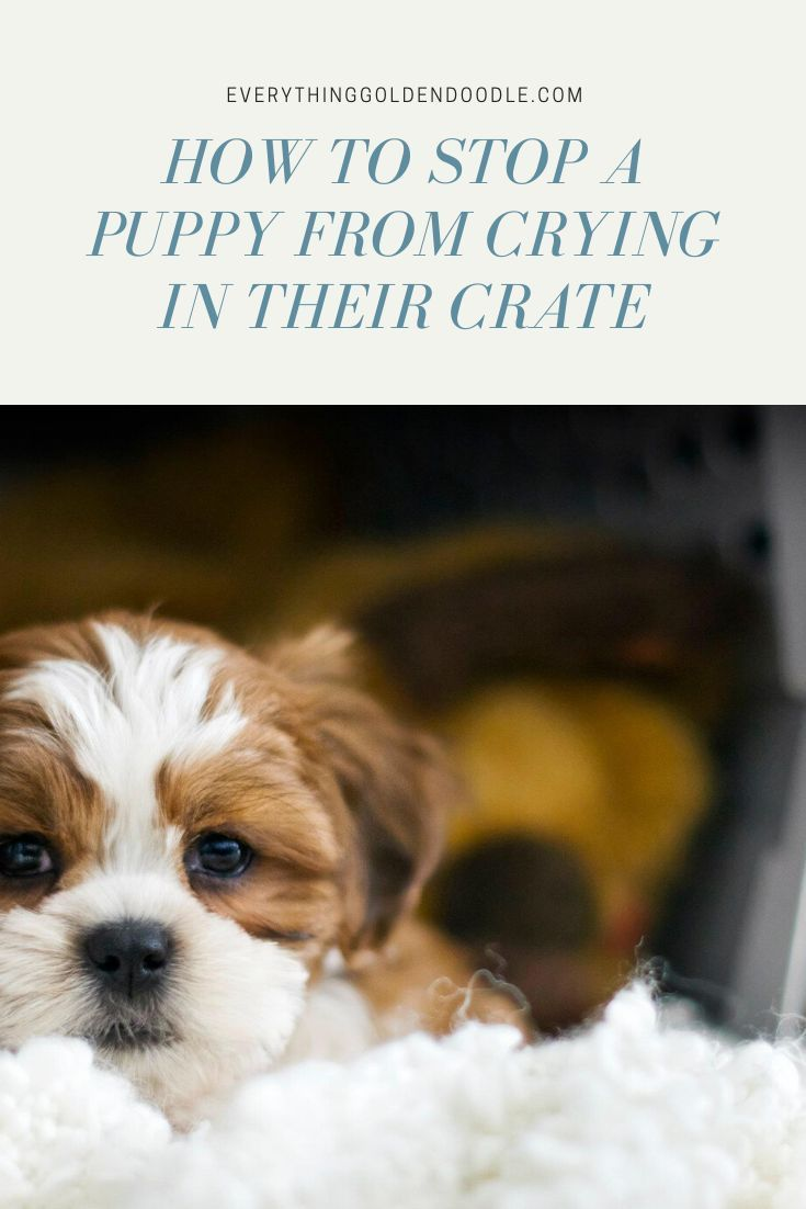 How to stop a puppy from crying or whining in their crate