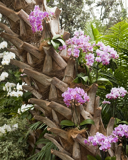 The Orchid Show: Cuba in Flower by NYBG, via Flickr