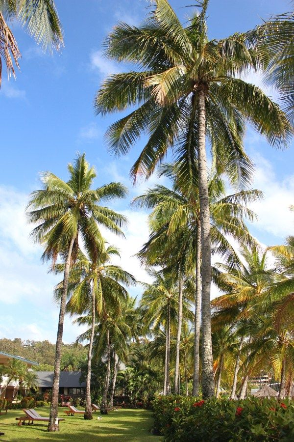 Hamilton Island Guide to Eat, Play & Rest