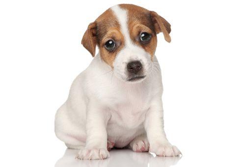 Verlatingsangst of niet alleen thuis kunnen zijn bij honden: | Causus