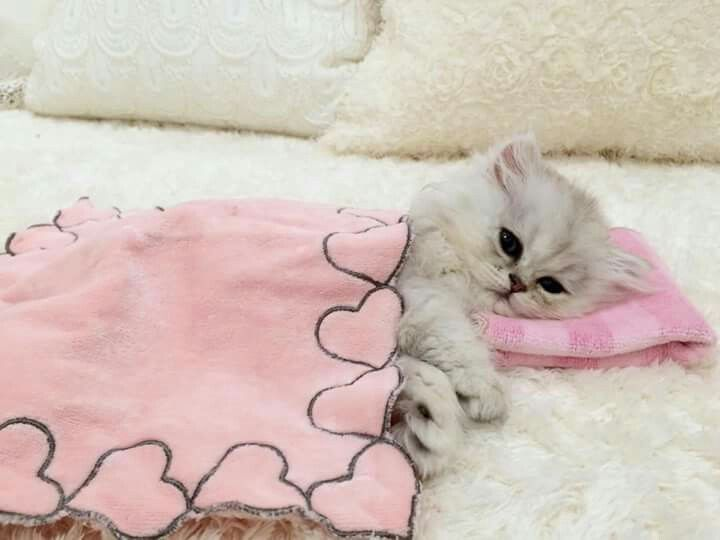 Awwwww so adorable!