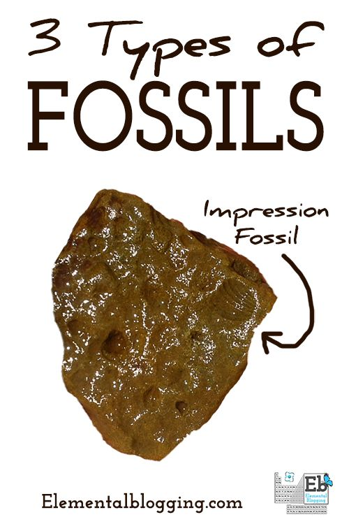 3 types of fossils homeschool nice and free printables. Black Bedroom Furniture Sets. Home Design Ideas