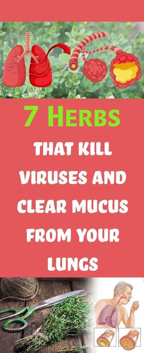 Herbs to clear mucus and kill viruses