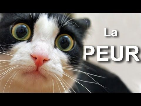 ▶ La peur - YouTube