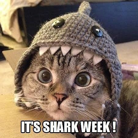 The Internet's Funniest #SHARKWEEK Memes!