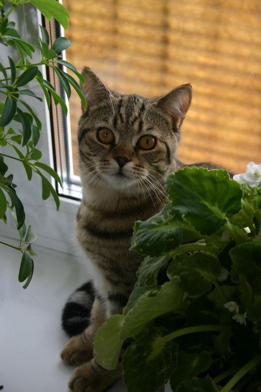 Растения, опасные для человека, могут оказаться вредными и для домашних животных. Это касается кошек, собак, птичек, морских свинок, кроликов, хомяков, — то есть всех, кому позволено передвигаться по квартире. Если кошкам не разрешается каждый день гулять на улице, где они могут удовлетворить потребность в поедании травы, то они начинают обгрызать растения, в том числе и ядовитые. При поедании, например, диффенбахии или молочая, животное может получить сильное отравление, вплоть до ...
