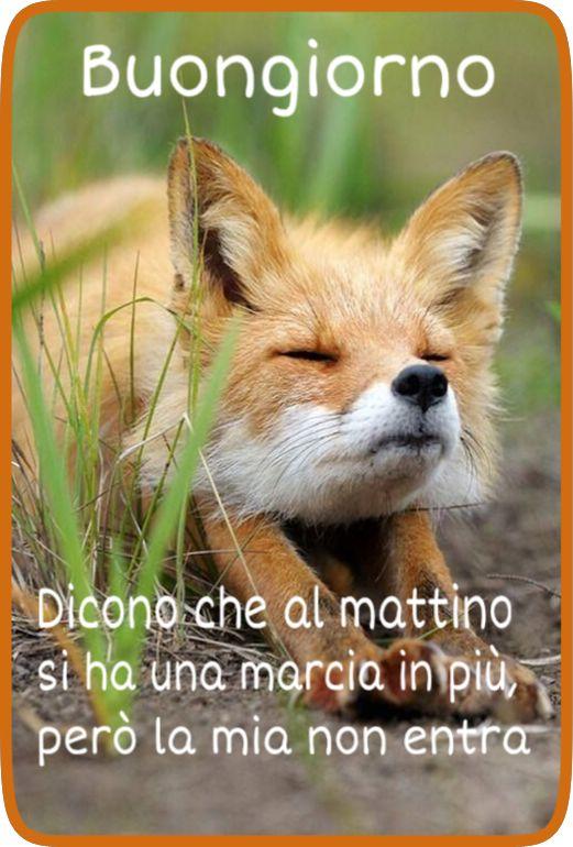 25 best ideas about buongiorno on pinterest il piccolo for Top immagini buongiorno