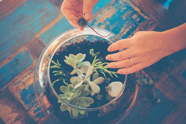 un terrarium... une belle idée cadeau handmade (avec conseils d'entretien) - planB par Morganours                                                                                                                                                     Plus