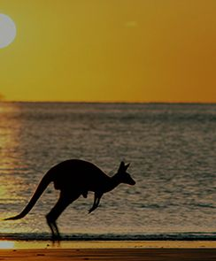 Kangaroo Island Day Trip by Air-Adelaide, Australia INR 30874.0 Duraion:  10 hours Activity Details: Fly to Kangaroo Island and experience its friendly native wildlife and natural, unspoiled wilderness.