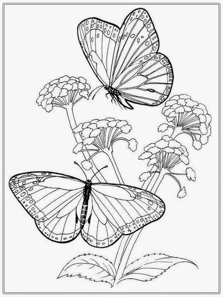 Coloring Pages Of Butterflies Monarch Free Butterfly Life