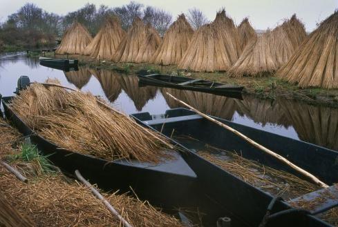 Récolte des roseaux de Brière