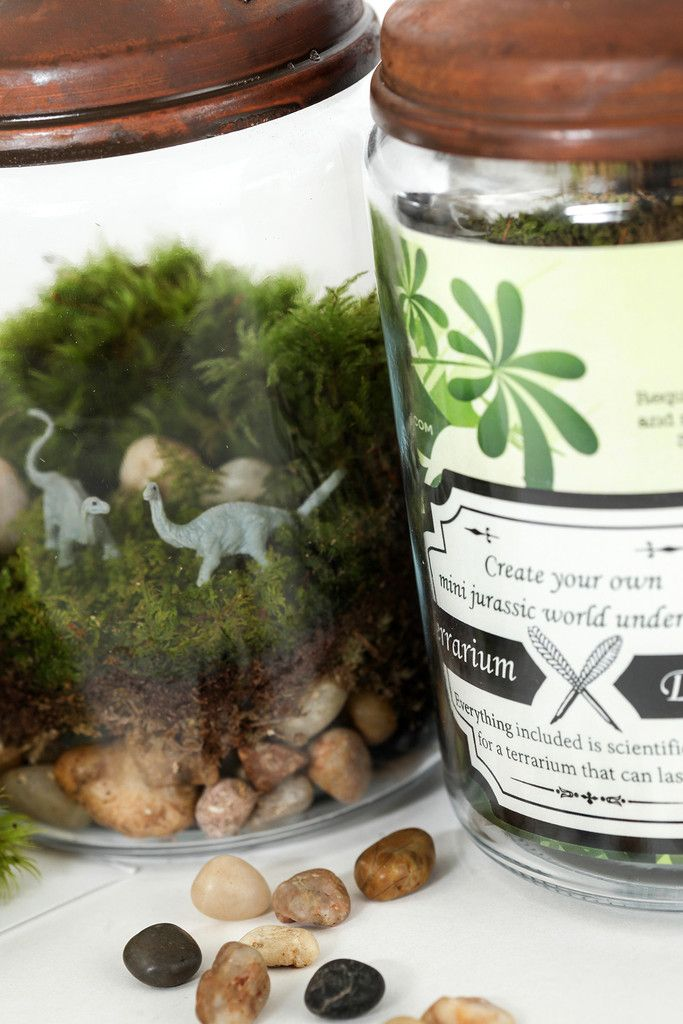 Make a kit at home ourselves, as a little boy's gift - Jurassic in a Jar DIY Terrarium Kit