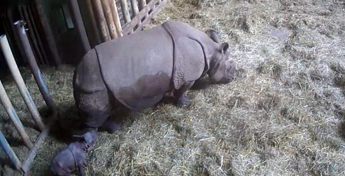 Do plzeňské zoo vroce 2017 přišlo 452 762 návštěvníků