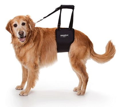 Gingerlead - Dog Support and Rehabilitation Harness