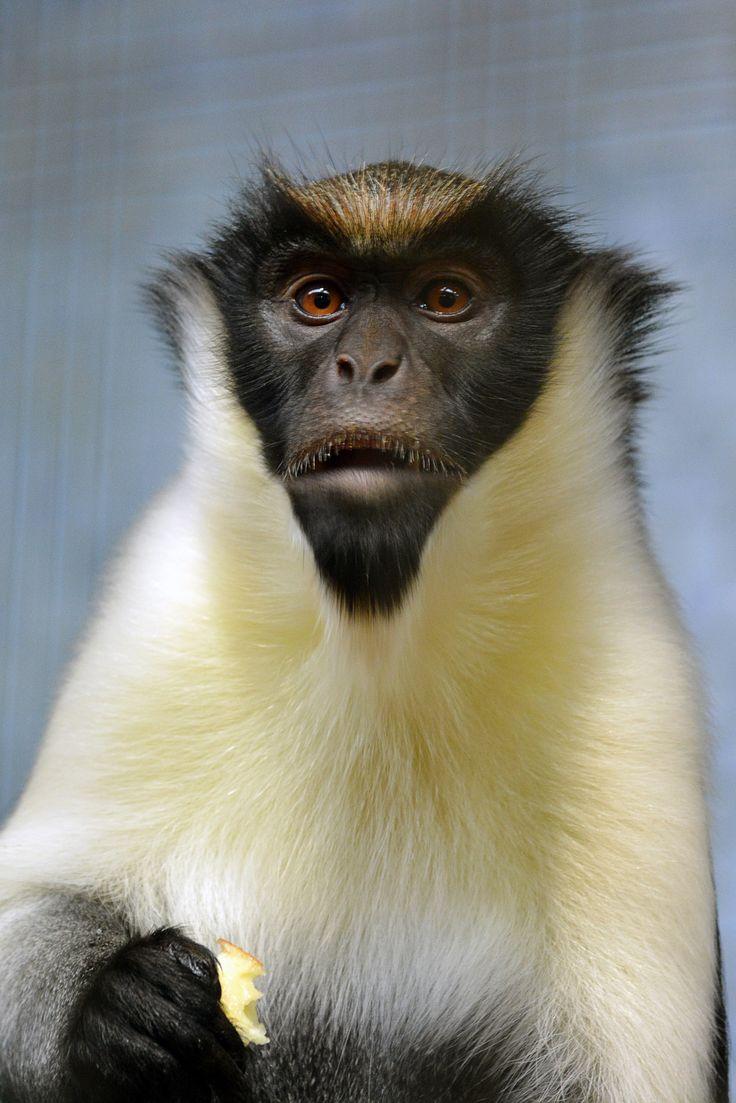 best 25 monkey pictures ideas on pinterest funny monkey
