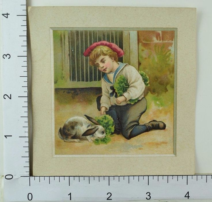 Victorian Trade Card Adorable Boy Sailor Outfit Feeding Pet Rabbit Lettuce #F