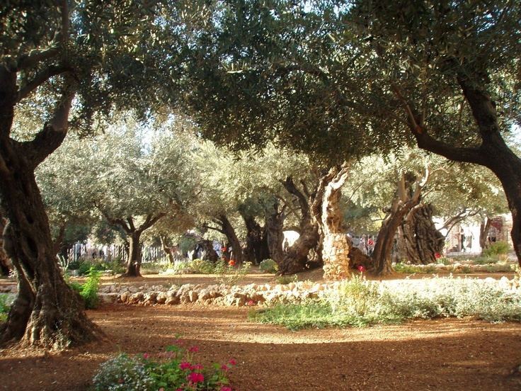 Image result for jerusalem garden plant