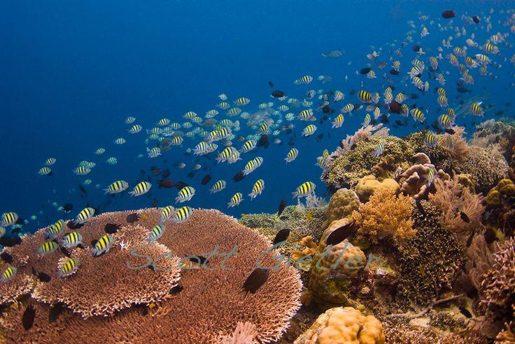 Diving in the Bunaken Marine Park