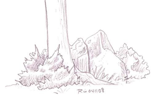17 best images about how to draw realistic trees plant for How to draw a rose bush step by step