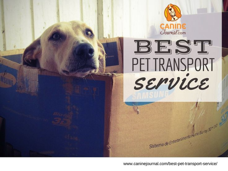 Best Pet Transport Service: Which Best Meets Your Pet Relocation Needs?