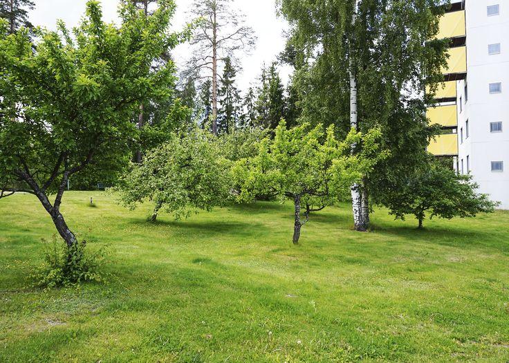 Foibessa on luonto lähellä.