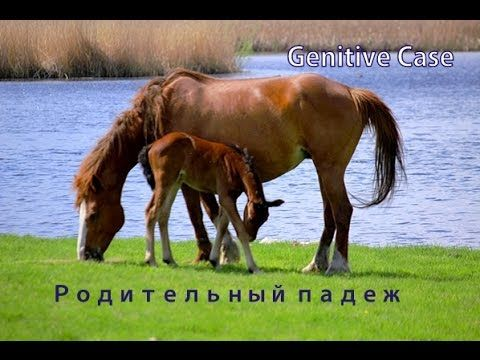 Genitive case in Russian