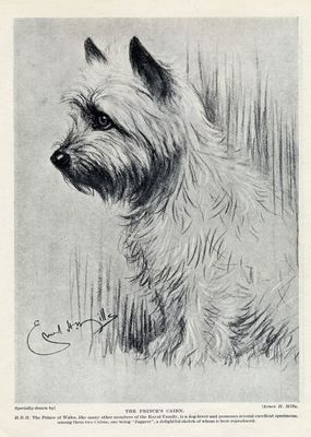"Cairn Terrier Lovely Vintage Dog Print 1934 ""The Prince's Cairn"" 