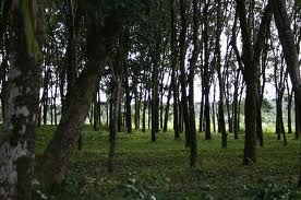 Great Worship Tourist Hill Station Place in Kerala and find Affordable Packages on Fli-ghts.